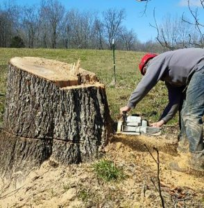 stump removal service in Clarksville Tennesee